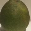 フルーツミャンマー紀行 その5 Pomelo繋がりで果物のPomeloのご紹介