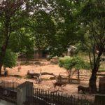 ヤンゴン動物園(Yangon Zoo、Yangon Zoological Gardens)